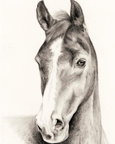 Pet portrait