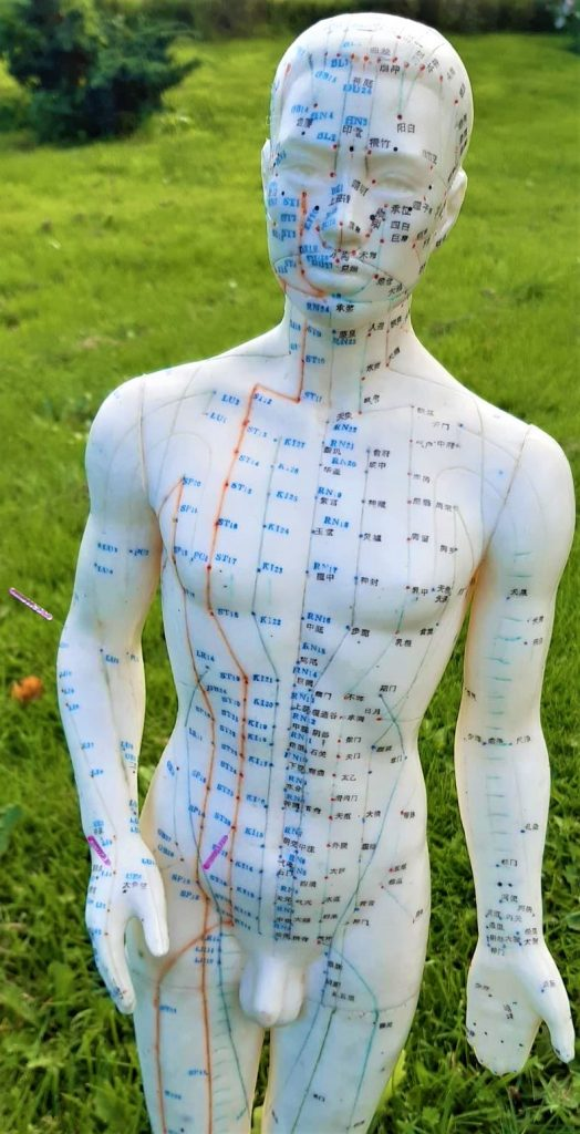 Akupunkturkurser