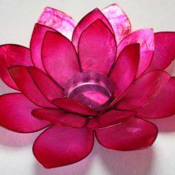 Lotus stage Pink Stor