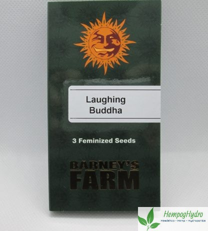laughing buddha cannabis frø