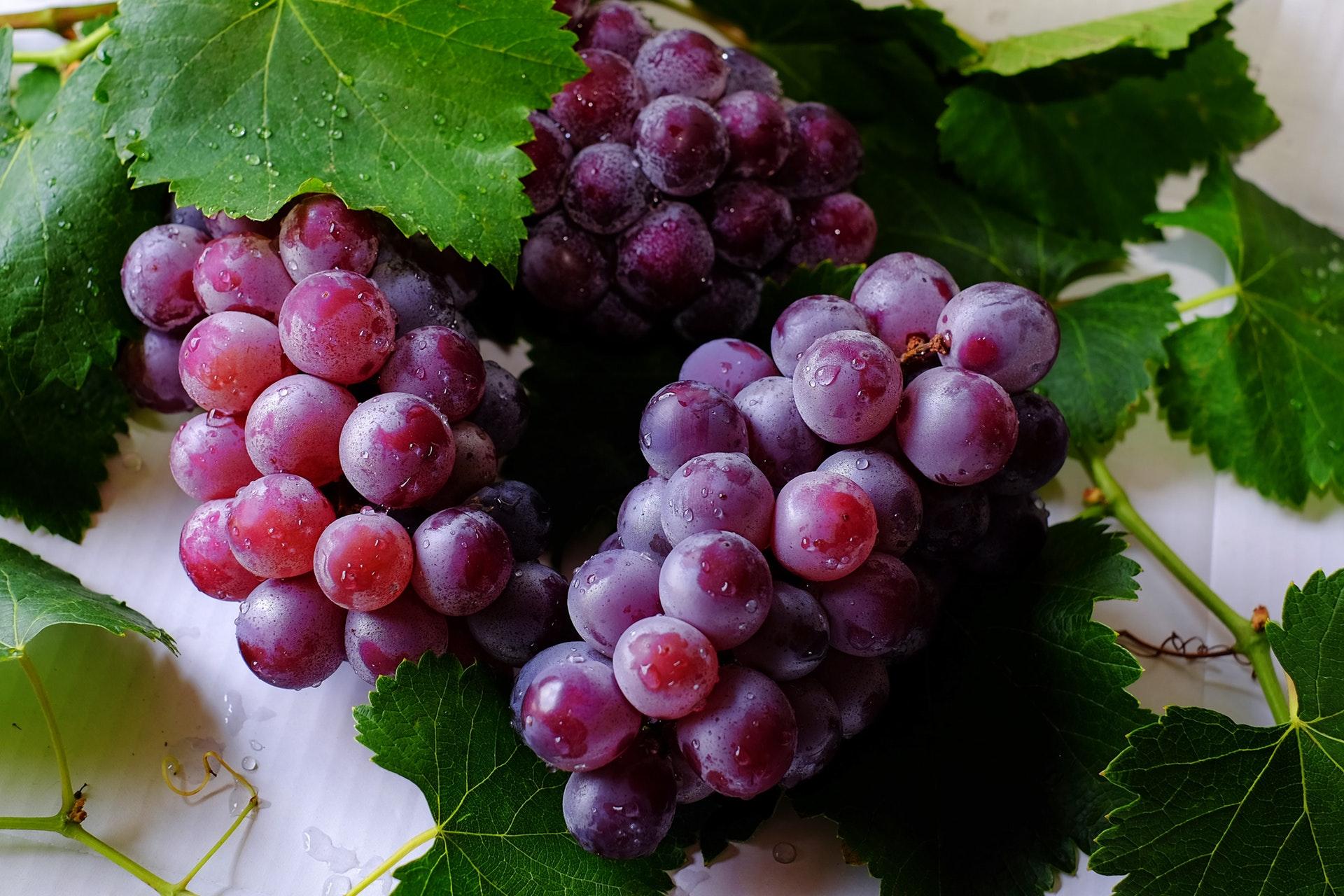 Beskära vinrankor och arbeta med bladverket på vindruvorna