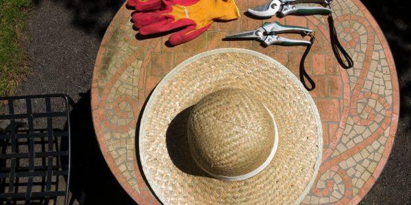 Verktyg som handskar och sekatör sax för att beskära vinrankor