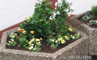 Blumenkübel bepflanzt