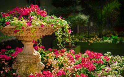garden, flowers, plants
