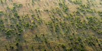 The Great Green Wall – Source: https://www.greatgreenwall.org/about-great-green-wall