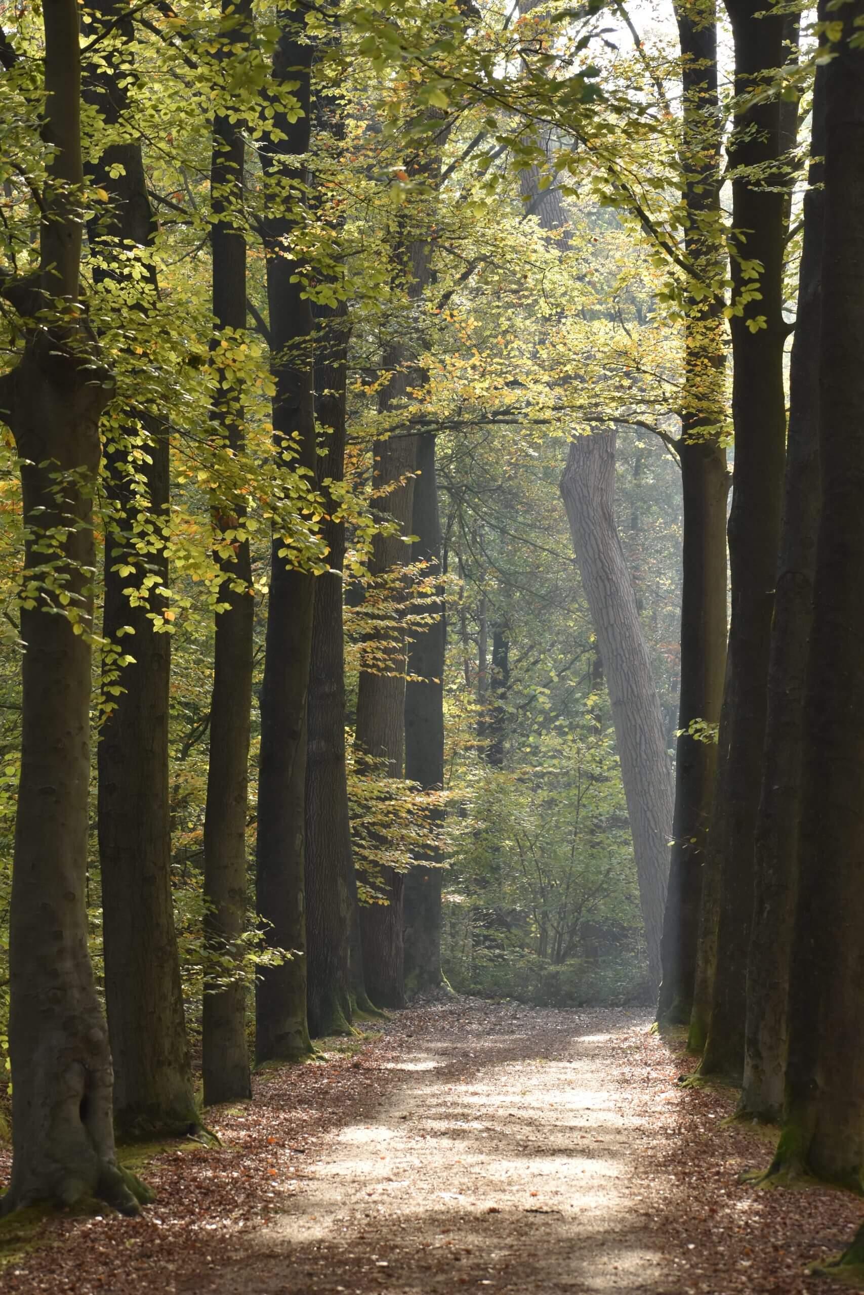 coaching natuur bos, Natuurcoaching