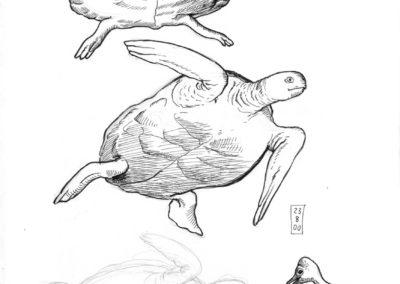 6-Schildkröten