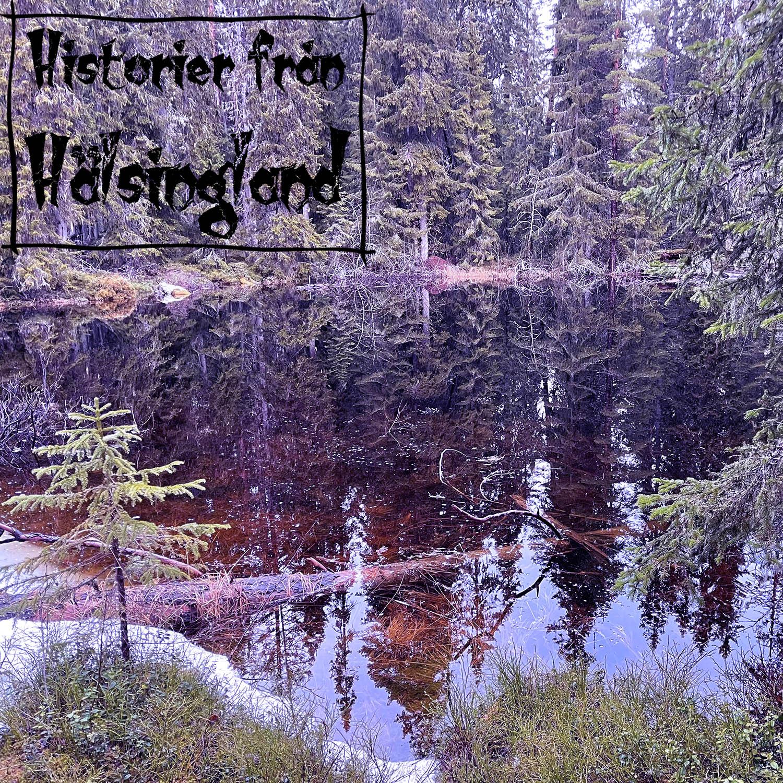 Finnskog och fäbod