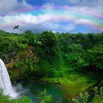 Kom helt tæt på den vilde natur på Hawaii