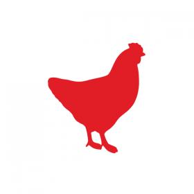 Kylling & fjørfe