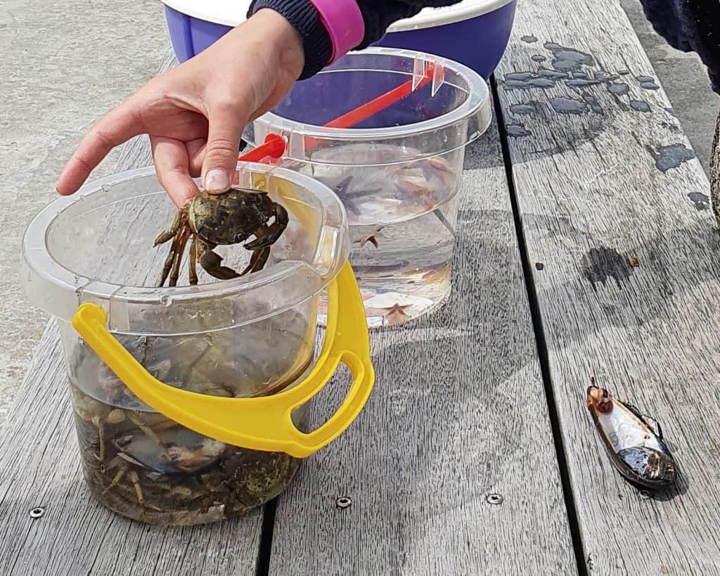 Krabbesuppe af egen fangst