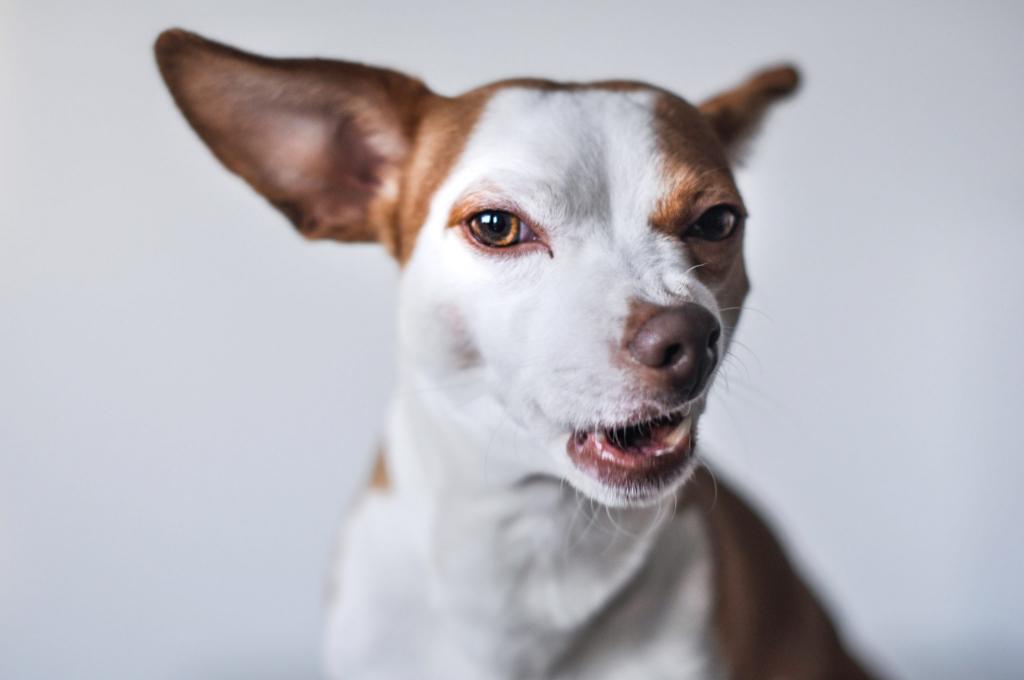 hondenbureau-samba-gedragsbgeleiding-foto1