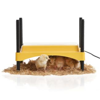 Värmetak kycklingar Ecoglow600