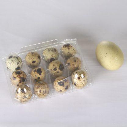 Äggkartong vaktel