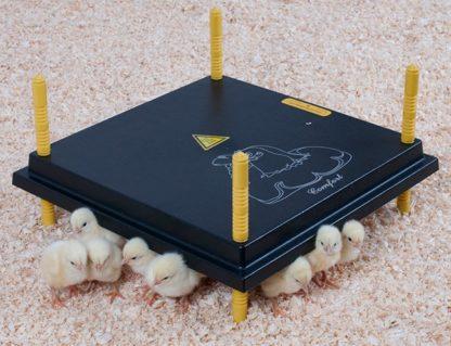Värmetak för kycklingar och vaktlar