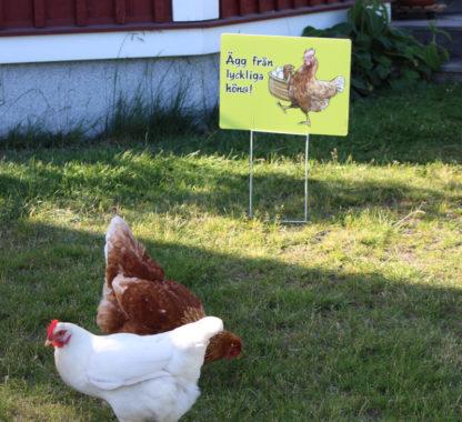 """Skylt """"Ägg från lyckliga höns"""" för dig som säljer ägg"""