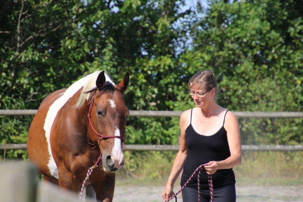 bliv uddannet inden for rideterapi nu