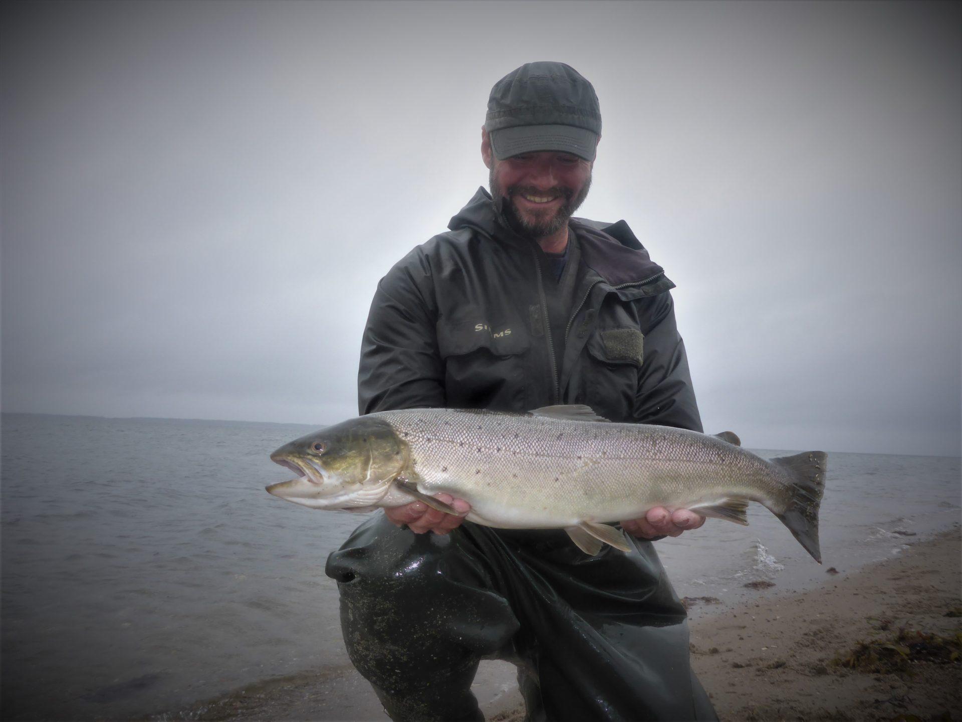 Lystfiskeri i Horsens Fjord kan ofte udmunde i fangsten af en stor havørred.