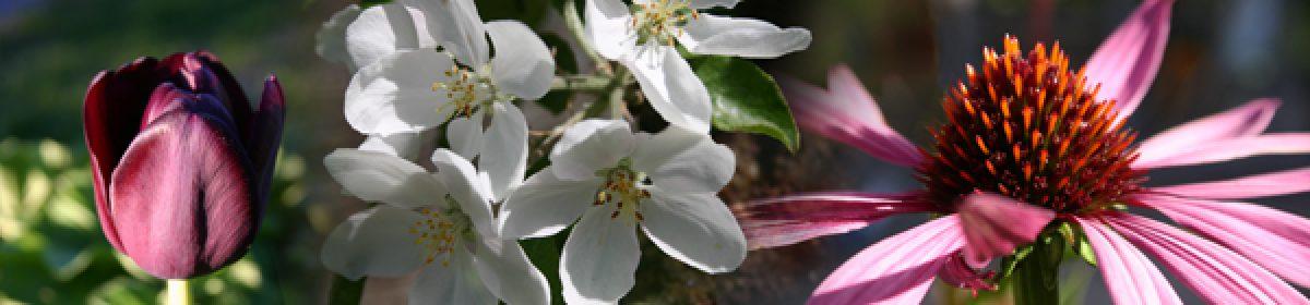 Hortlax trädgårdssällskap