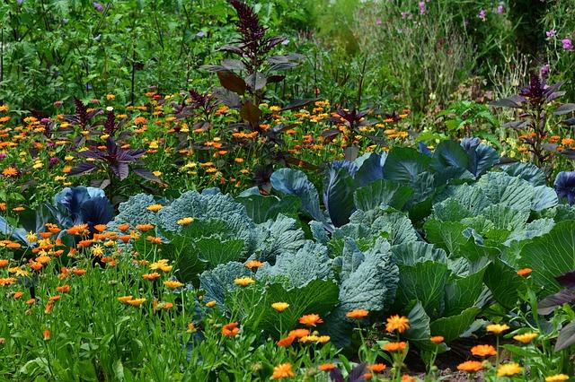 Which Vegetables To Plant In Hugelkultur beds?