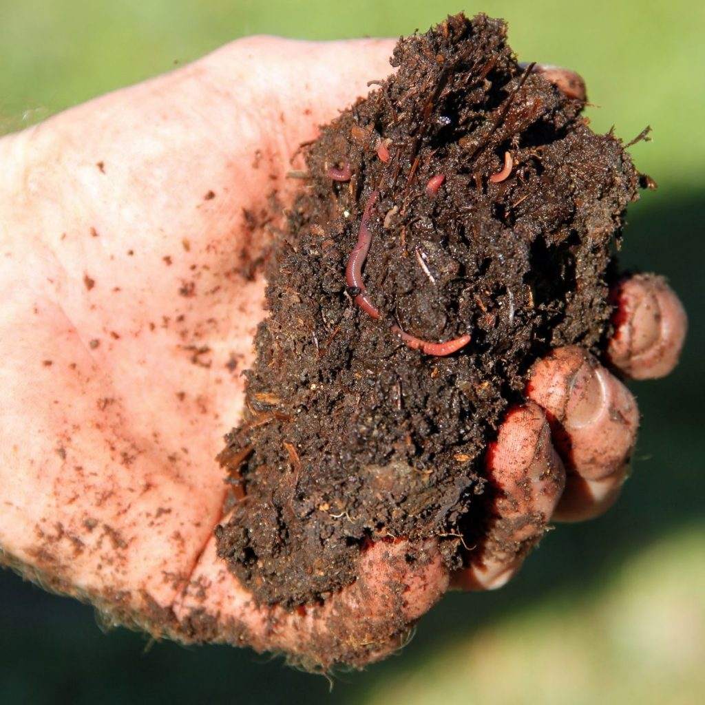 There is life in a cold compost