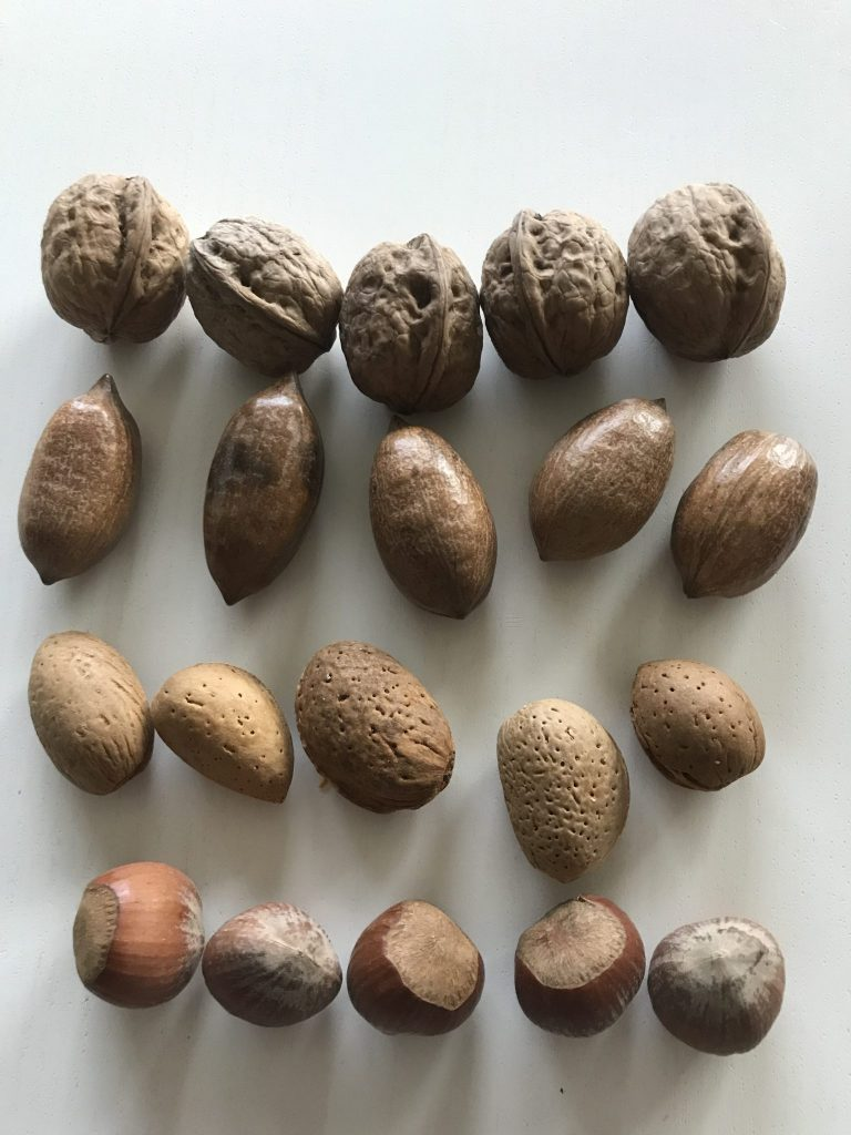 These were the five nuts I chose for this experiment. From top: Walnut, Pecan, Almond and Hazel