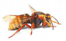 insectenbeten