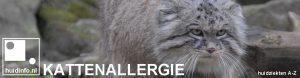 kattenallergie allergie voor kat poes