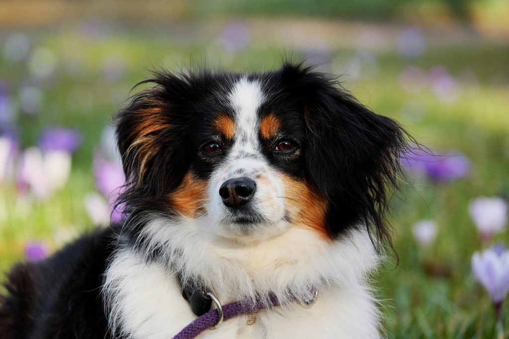 Miljø hundetræning hos Hunde-liv