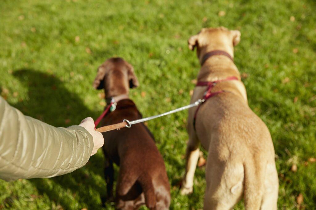 Hundetræning Gentofte, hundetræning Charlottenlund samt hundetræning Hillerød