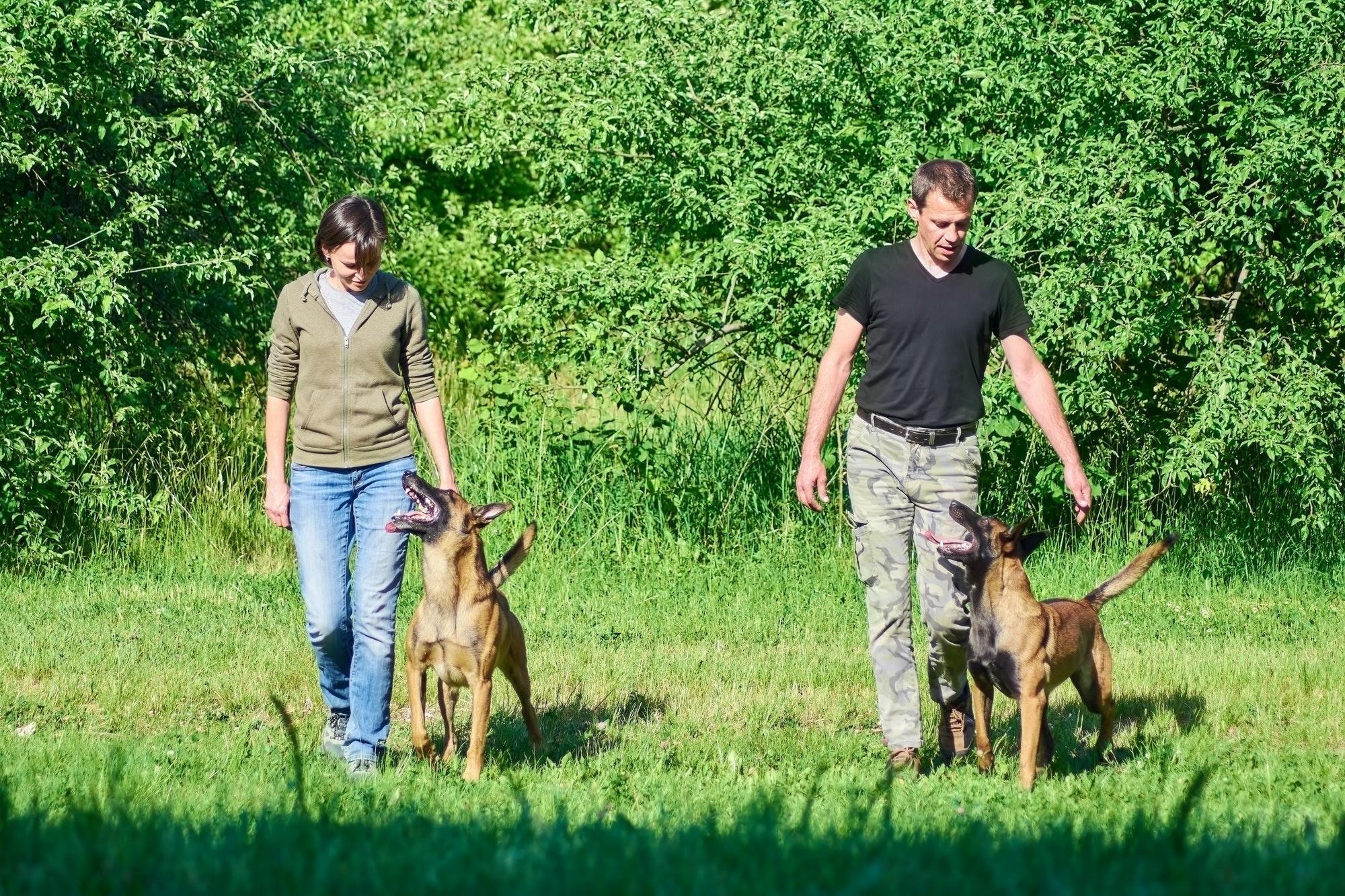 Hundetræning København og i Nordsjælland - din private hundetræner