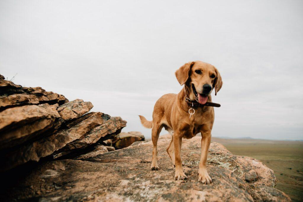 Hundeadfærd træning hos Hunde-Liv