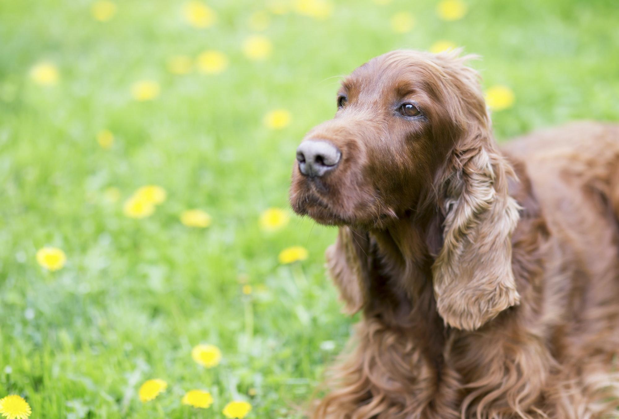 Hvalpetræning & hundetræning Gentofte - Privat hundetræner i Gentofte