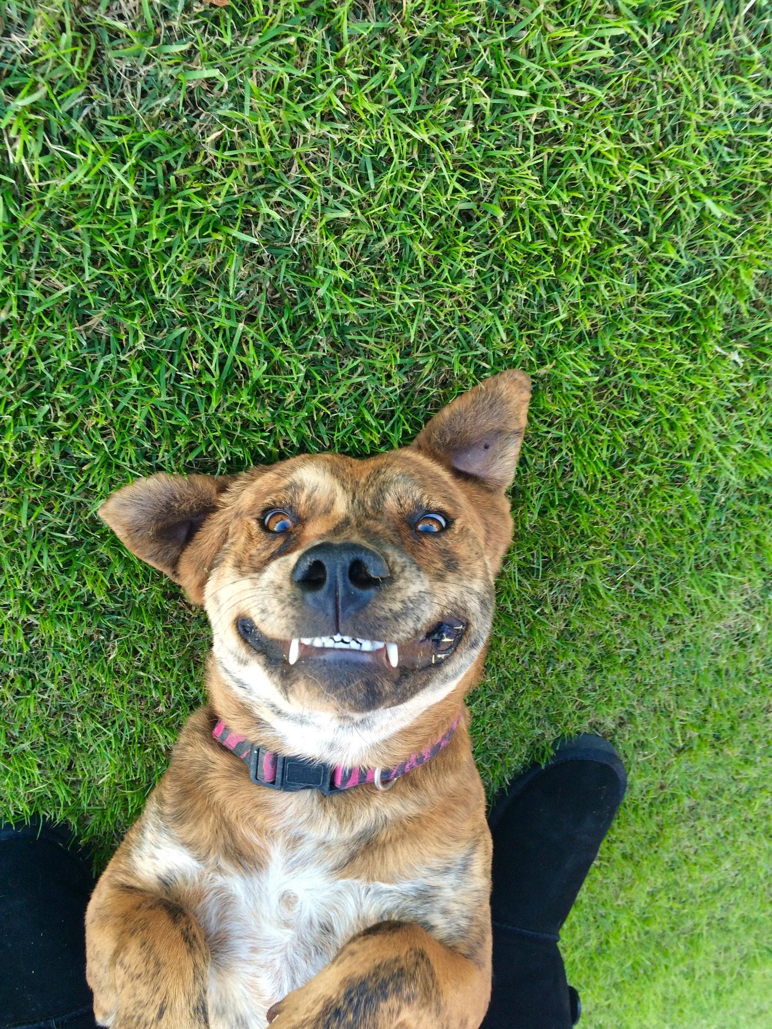 Hundetræning & Hvalpetræning Østerbro - Hunde-Liv's hundetræner Østerbro tilbyder fleksibel hundetræning Østerbro privat og i hold