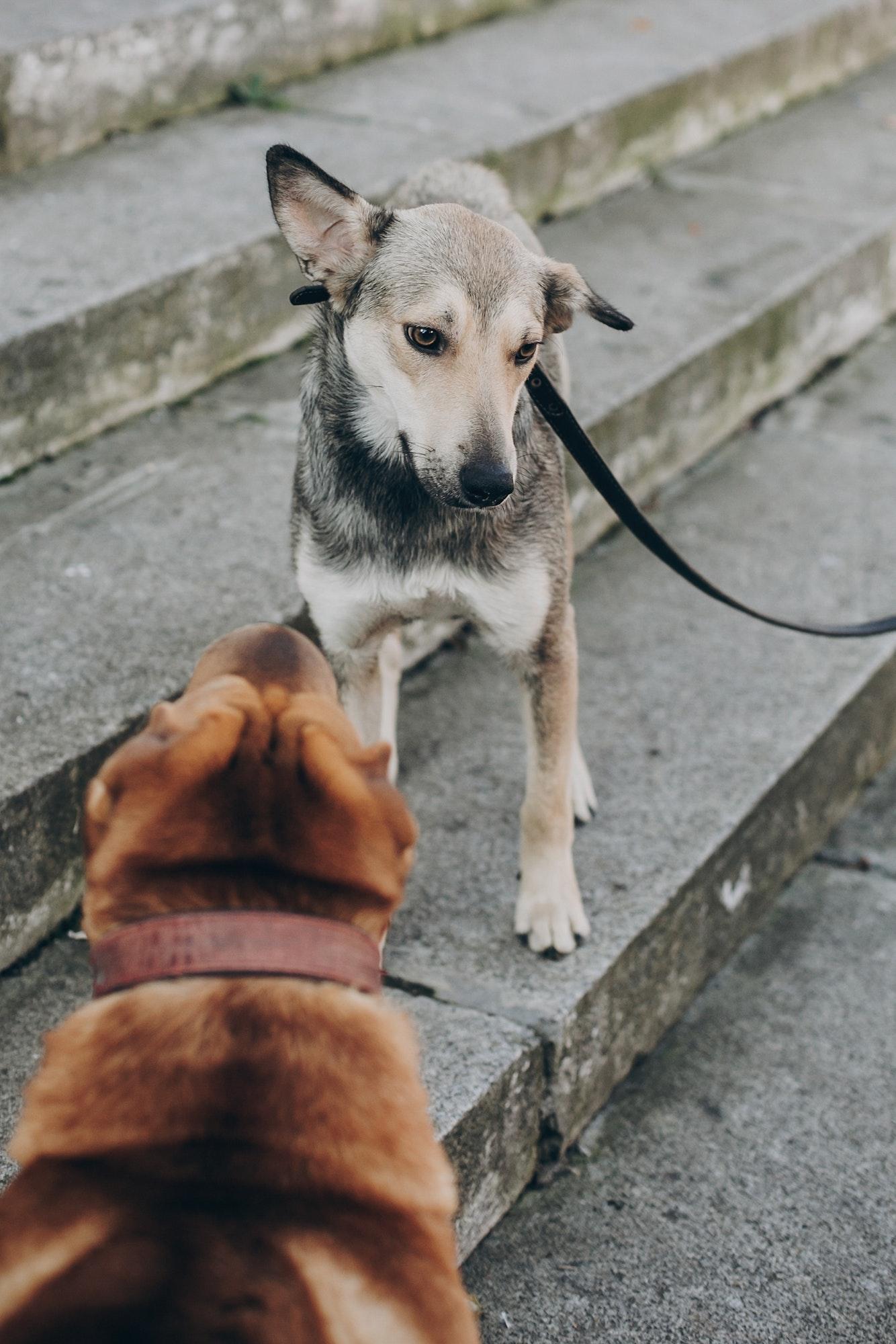 Hundetræning & Hvalpetræning Gentofte - Hundetræner Gentofte tilbyder fleksibel træning privat og i hold, læs mere om hundetræning Gentofte
