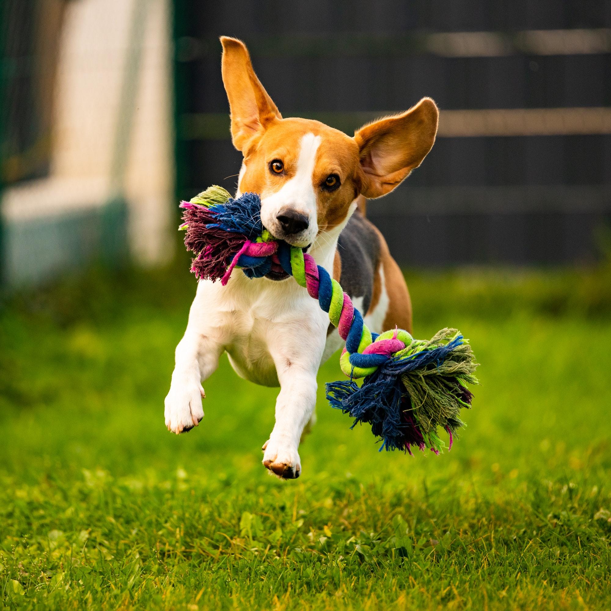 Hundetræning & hvalpetræning Lyngby ‖ Privat hundetræner