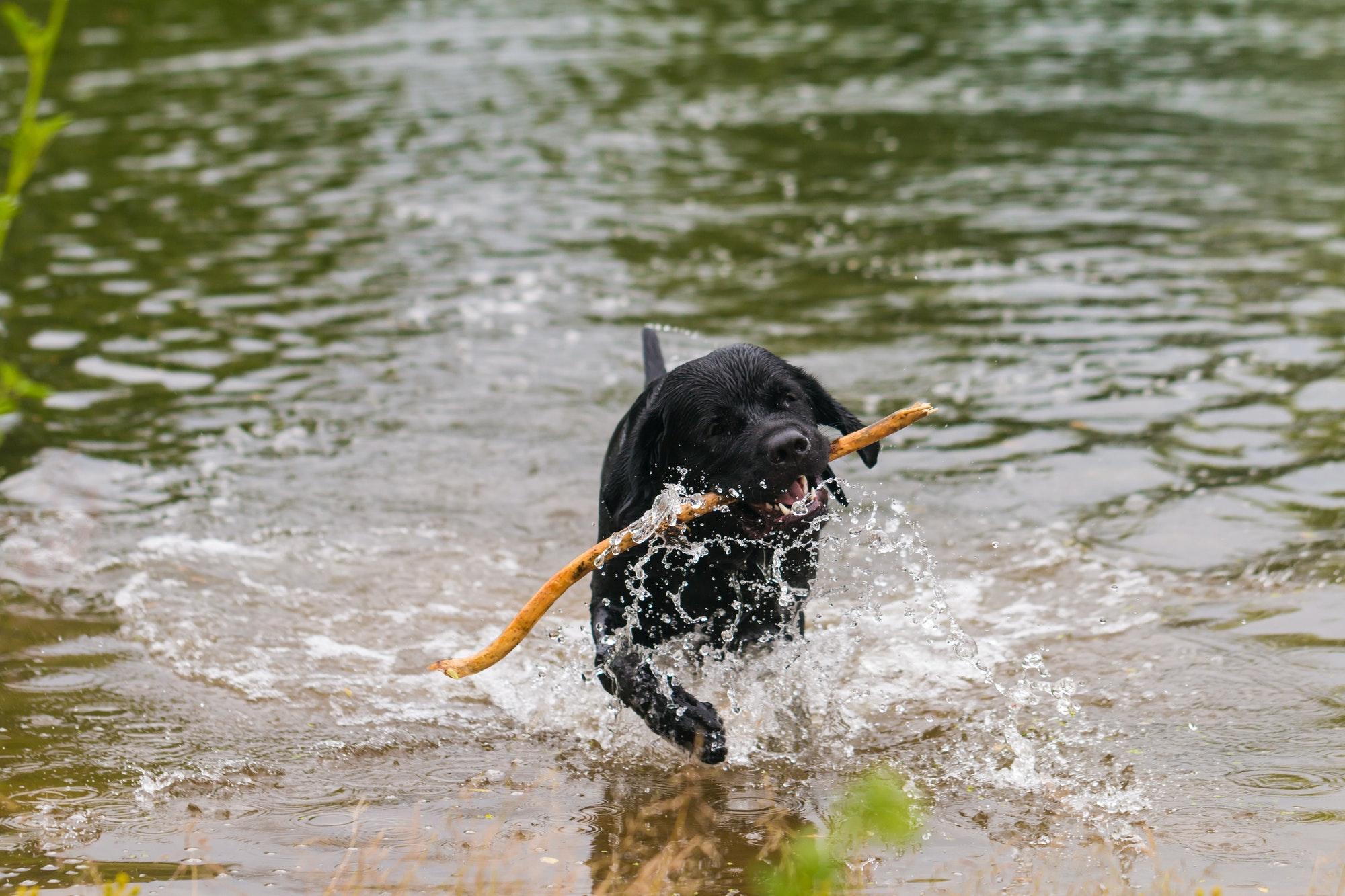 Hvalpetræning Lyngby - Bor du i Lyngby Taarbæk kommune og overvejer du hundetræning eller hvalpetræning til din hund? Læs mere her