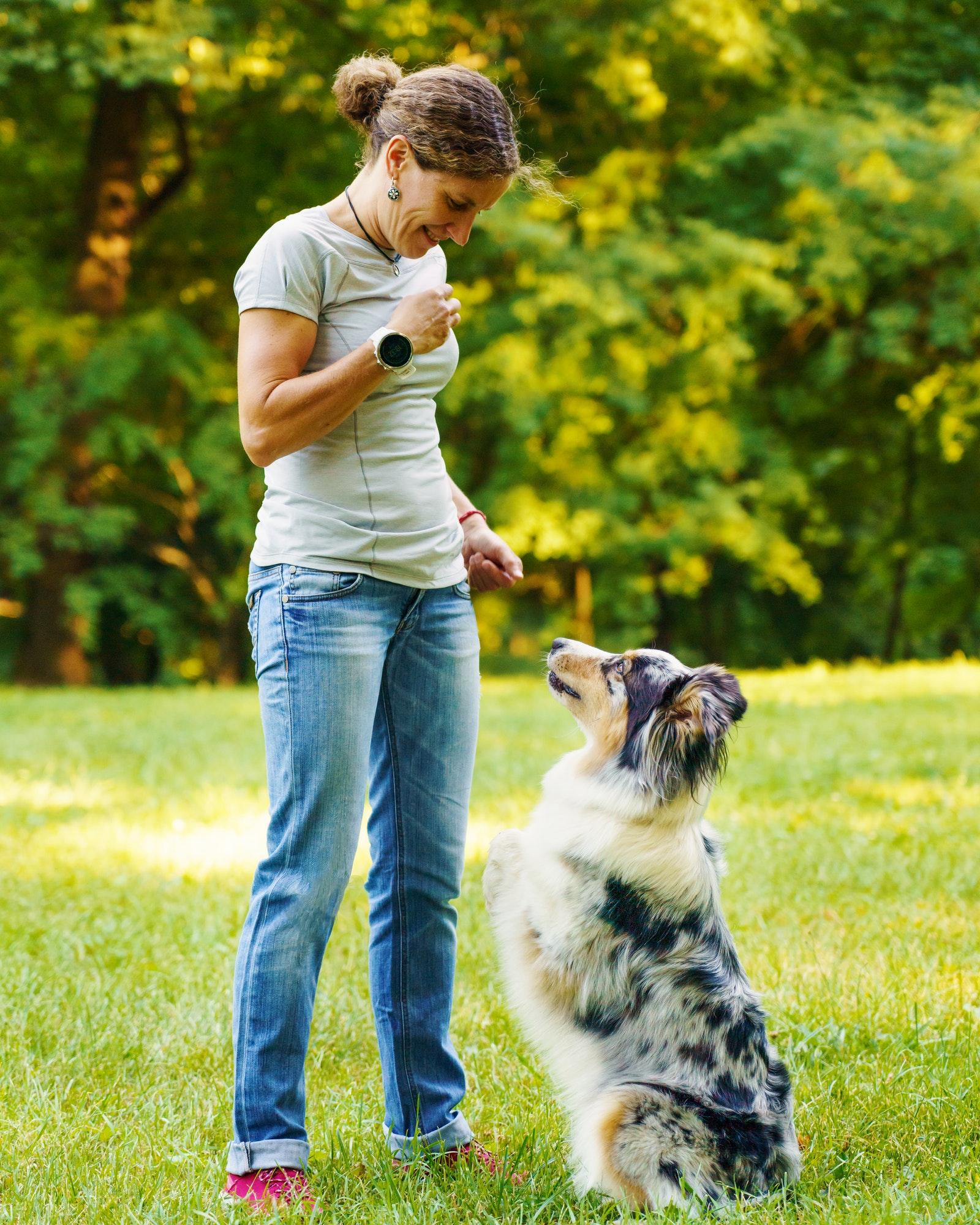 Hundetræning Lyngby & hvalpetræning Lyngby ‖ Privat hundetræner - Hunde-Liv's hundetræner Lyngby tilbyder hundetræning privat og i hold