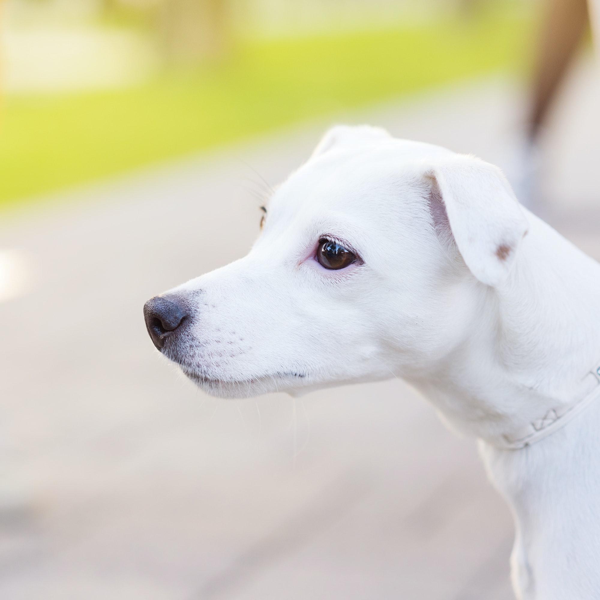 Hundetræning samt hvalpetræning Charlottenlund og Hellerup