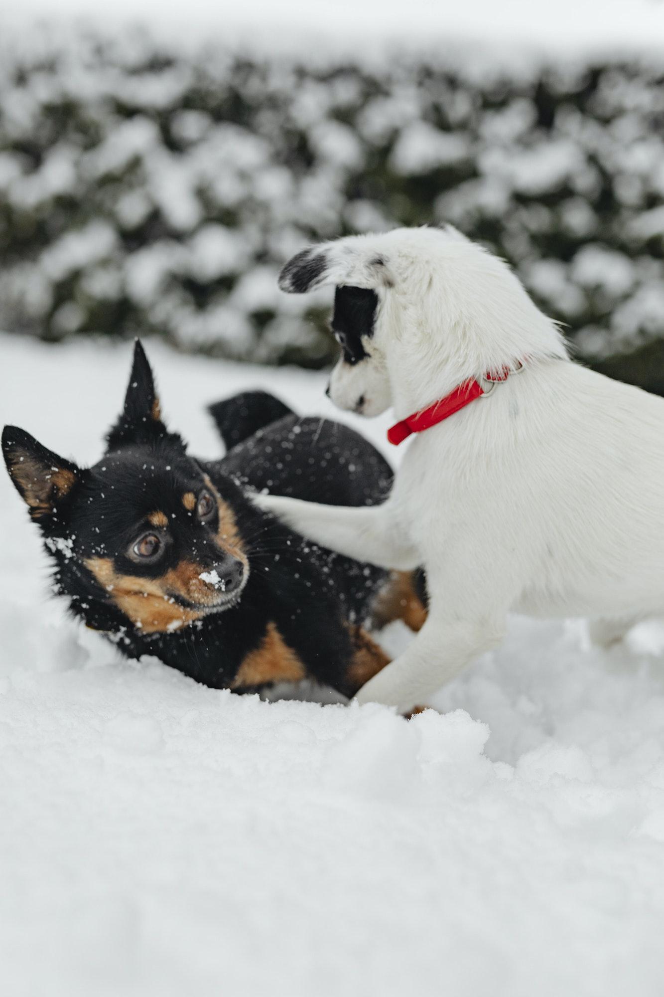 Hundetræning Amager & hvalpetræning Amager ‖ Privat hundetræner - Hunde-Liv's hundetræner Amager tilbyder hundetræning privat og i hold