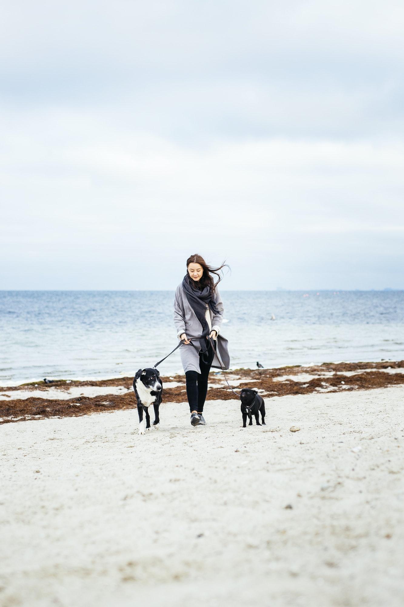 Søger du f.eks. hundetræning Hellerup, hvalpetræning Charlottenlund eller hvalpetræning Hellerup? Læs hvad Hunde-Livs hundetræner tilbyder her