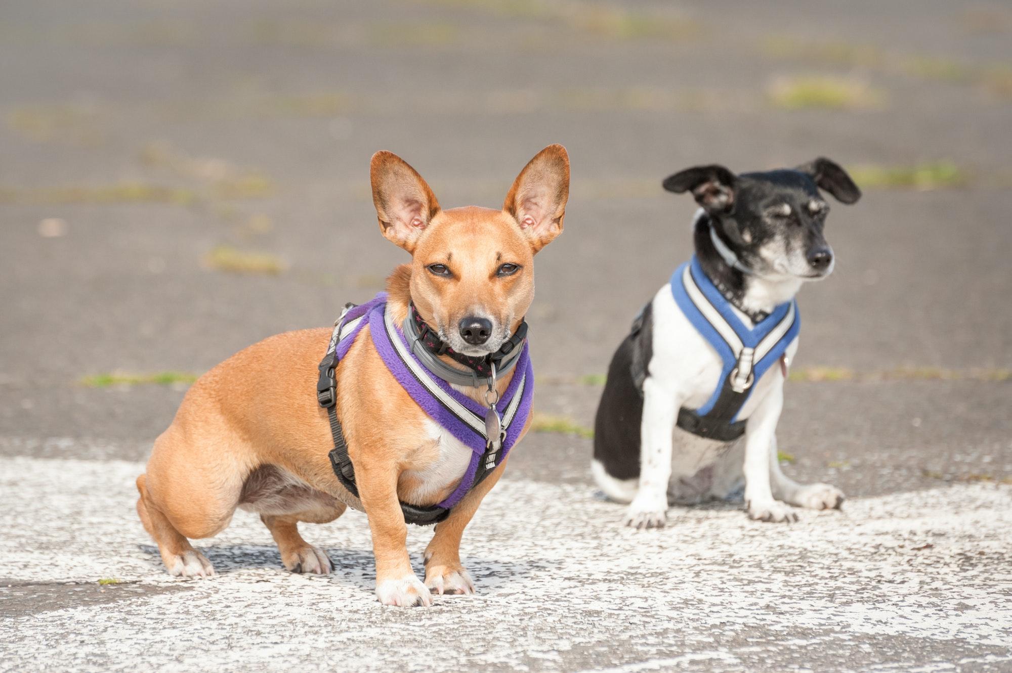 Hundetræning Nørrebro & hvalpetræning Nørrebro ‖ Privat hundetræner - Hunde-Liv's hundetræner Nørrebro tilbyder hundetræning privat og i hold