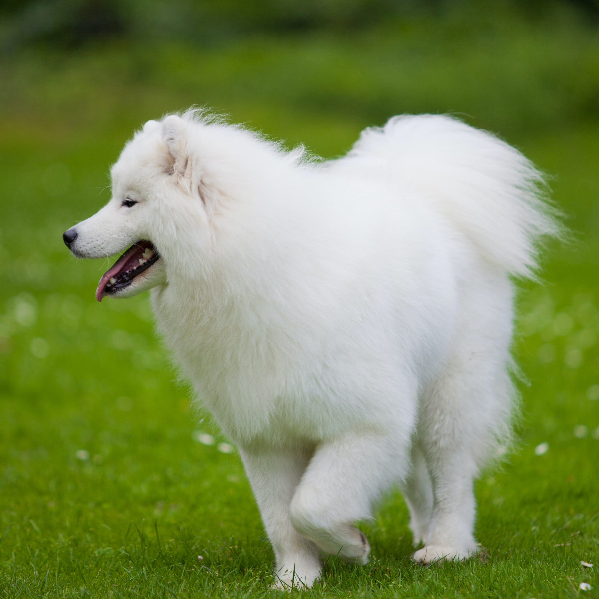 Hundetræning Søborg og Hvalpetræning Gladsaxe - privat & hold