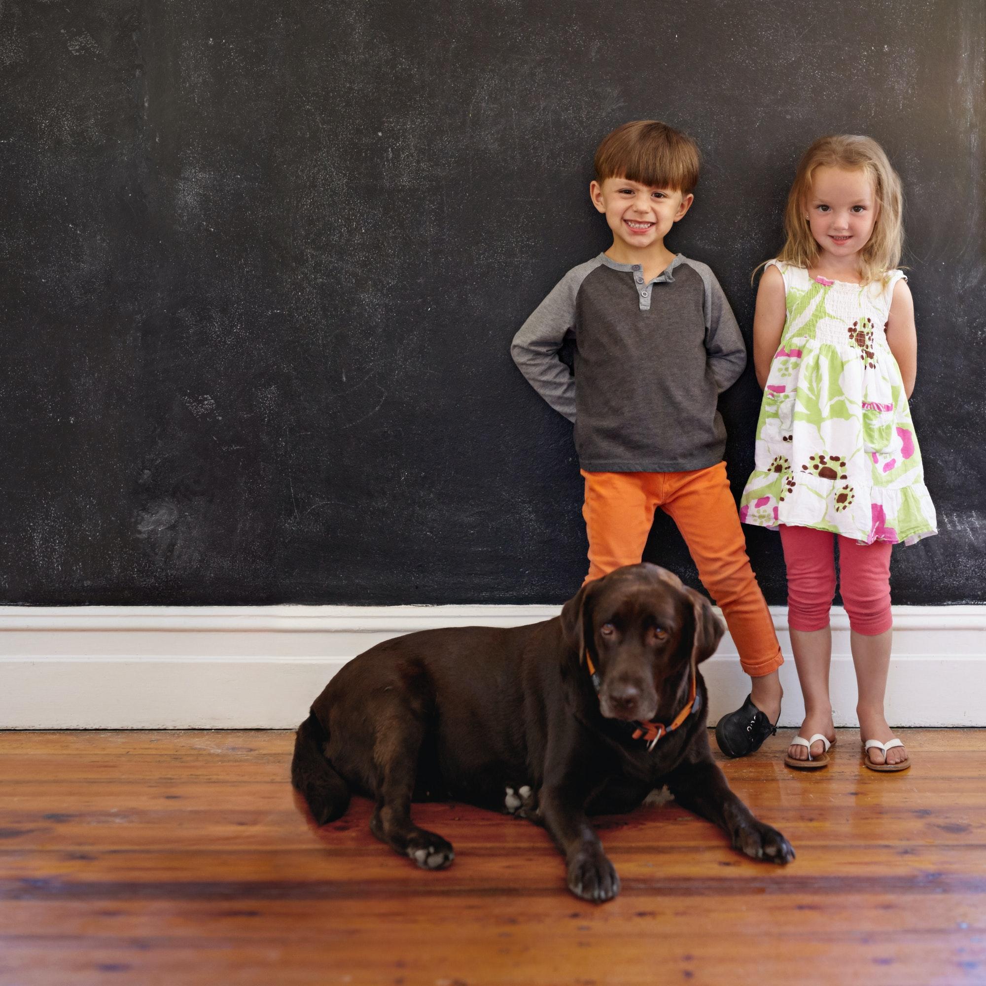 Søger du Hundetræning Hvidovre eller Hvalpetræning Hvidovre - privat eller holdtræning? Læs mere om Hunde-Livs hundetræner i Hvidovre her