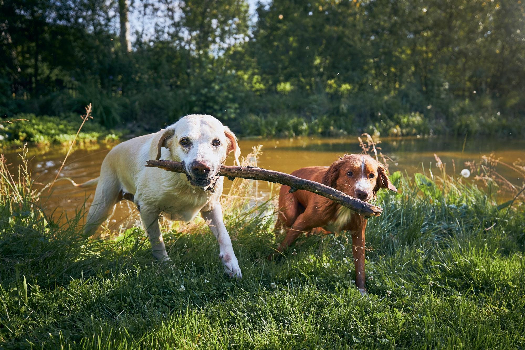 Hundetræning Hvidovre & Hvalpetræning Hvidovre, privat & hold