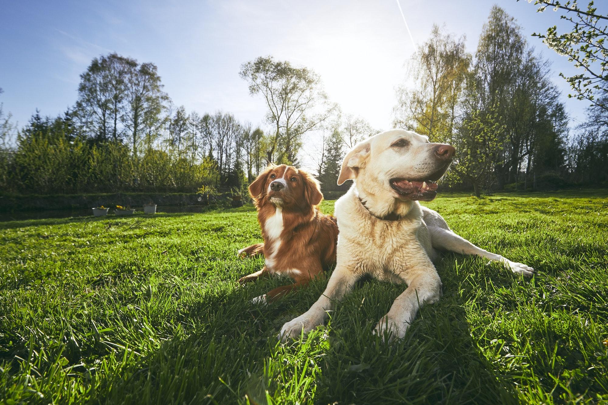 Hundetræning Søborg og Gladsaxe med mulighed for hvalpetræning privat og i hold
