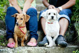 Hundetræning Hvidovre