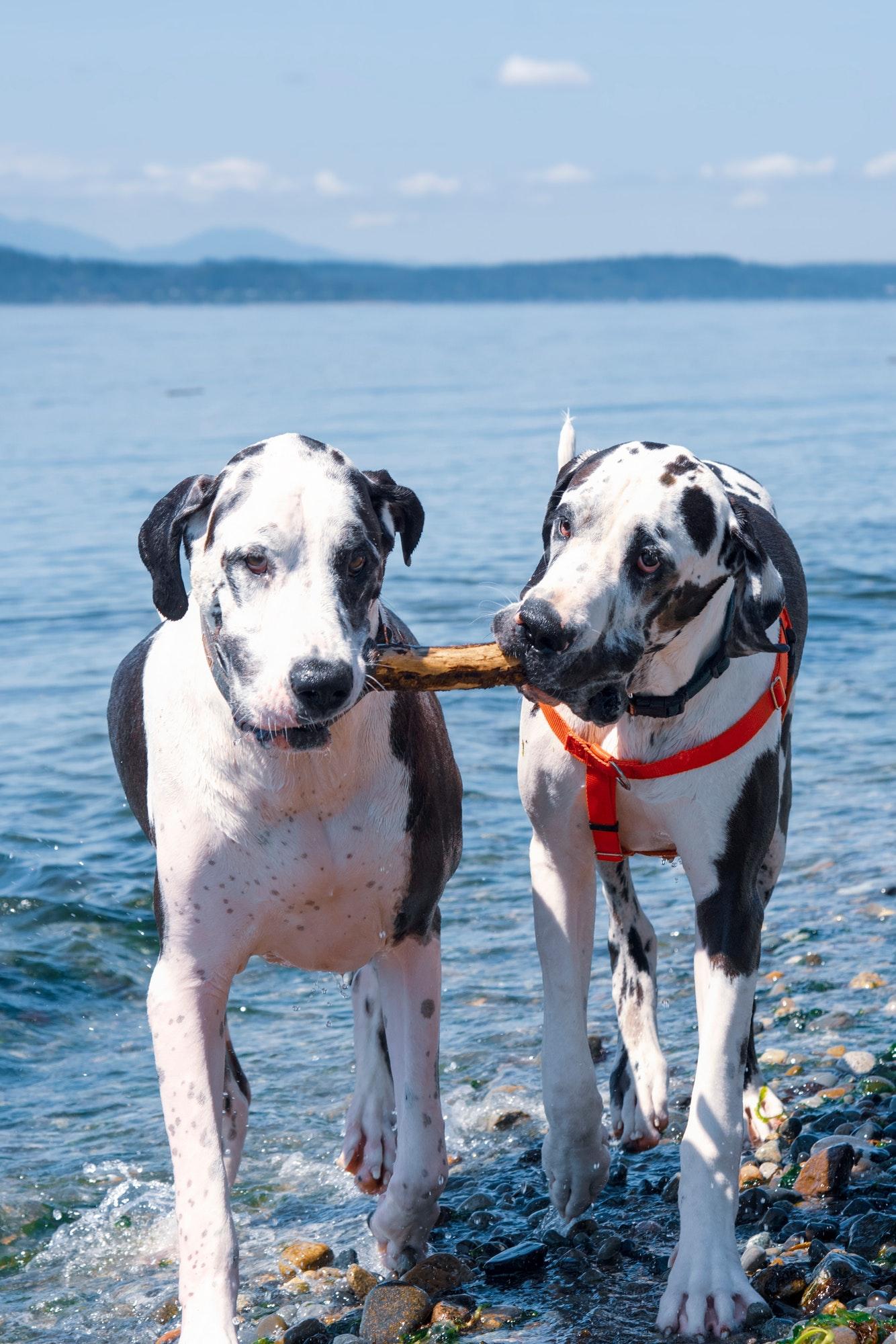 Søger du f.eks. hundetræning Vedbæk, hvalpetræning Vedbæk eller hvalpetræning Rungsted kyst? Læs hvad Hunde-Livs hundetræner tilbyder lokalt