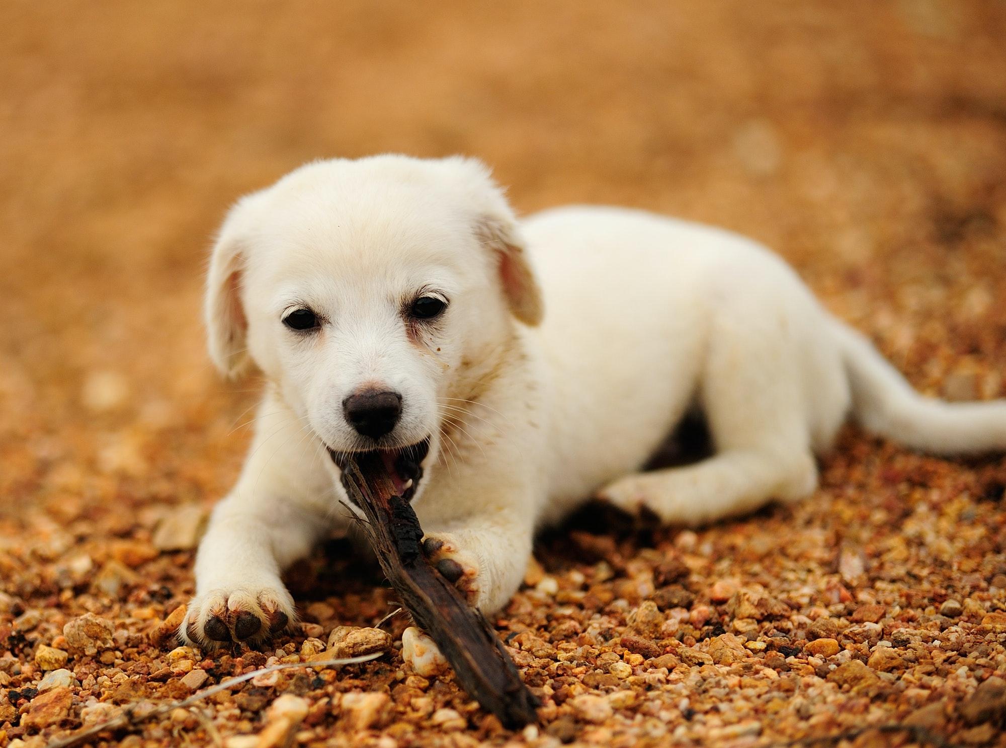 Hunde-Liv tilbyder hvalpetræning og hundetræning Vedbæk og Rundsted, i dit lokale område