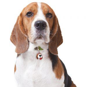 Beagle hundetegn